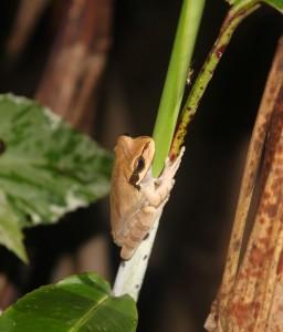froggie 2
